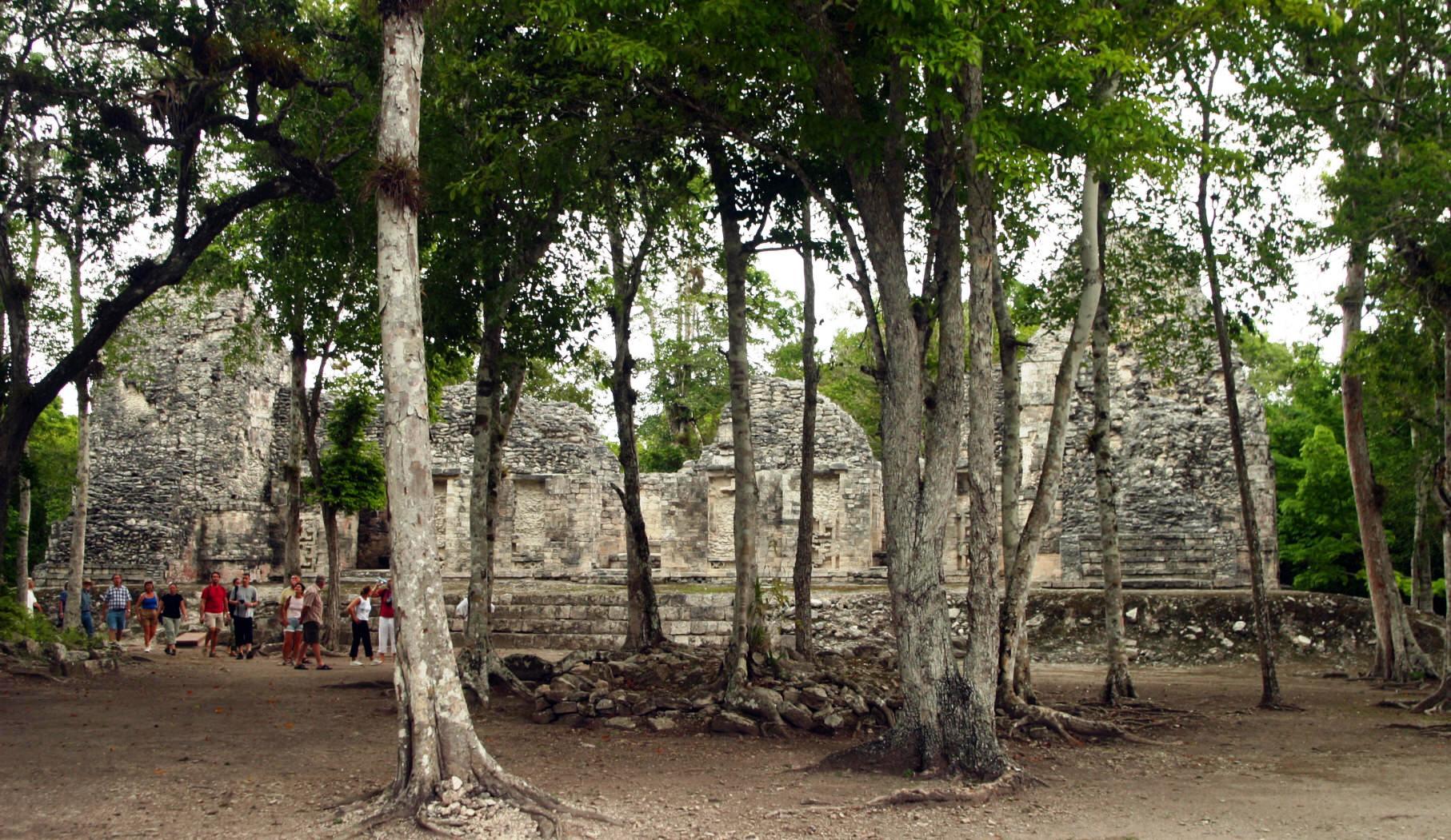 Árboles en la entrada de la zona de Chicanná