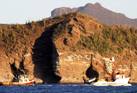 Shrimp boats head home to Guaymas along the rugged cacti studded coast