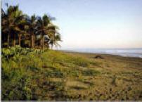 PlayaParaisioCamping4