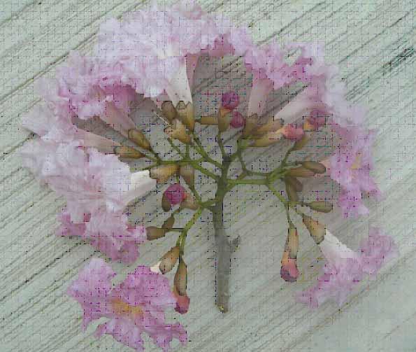 Primavera Tree2