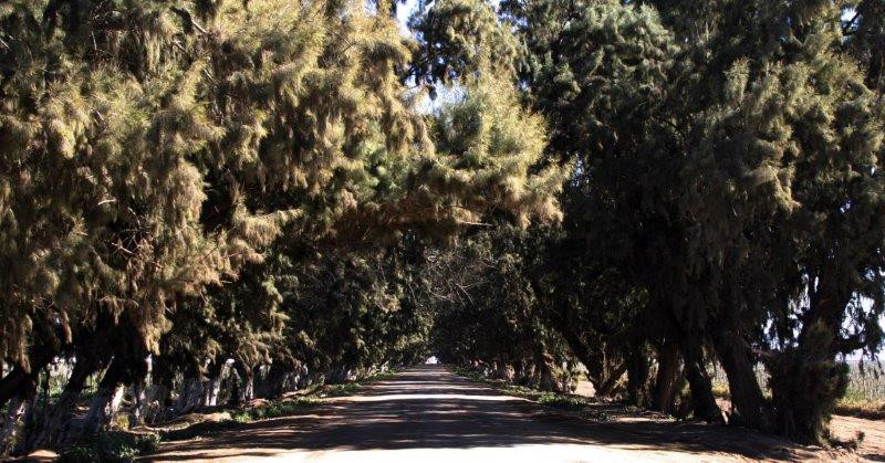 road to Cielito Lindo Rv 2